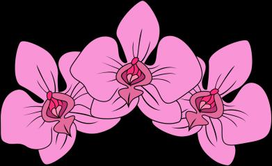 Print Etui na iPhone 11 Orchid flowers - PrintSalon