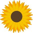 Print Bokserki męskie Sunflower - PrintSalon