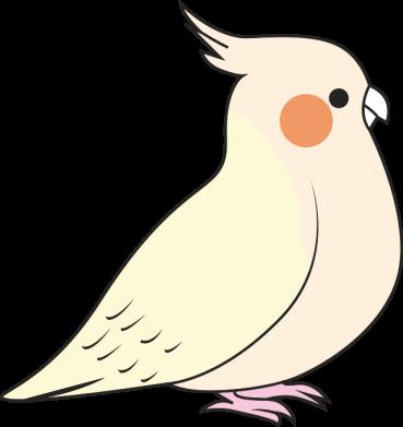 Print Bokserki męskie Cute parrot - PrintSalon