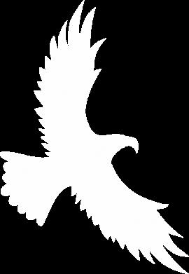 Print Bokserki męskie Big flying eagle - PrintSalon